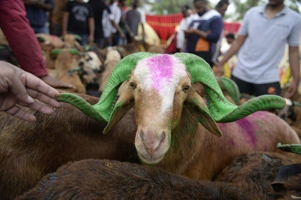 Photo of Hindus object to Eid animal slaughter in India